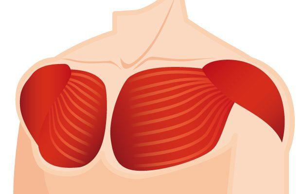 大胸筋に効かすパーソナルトレーニングフォームのポイントと筋トレ方