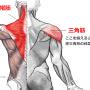 初心者でも肩の筋肉をつけて効率よく逆三角形になる筋トレのポイント